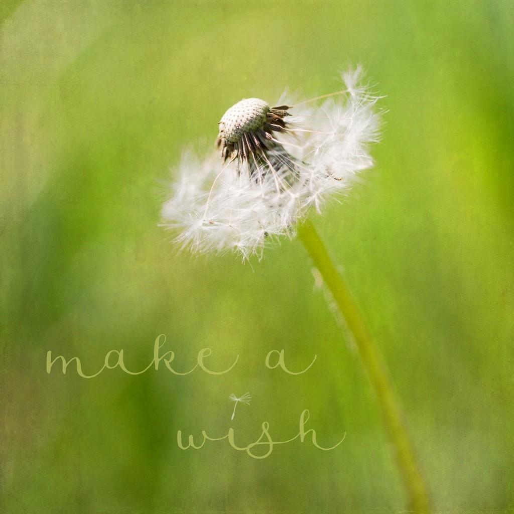 make_a_wish_lillemor