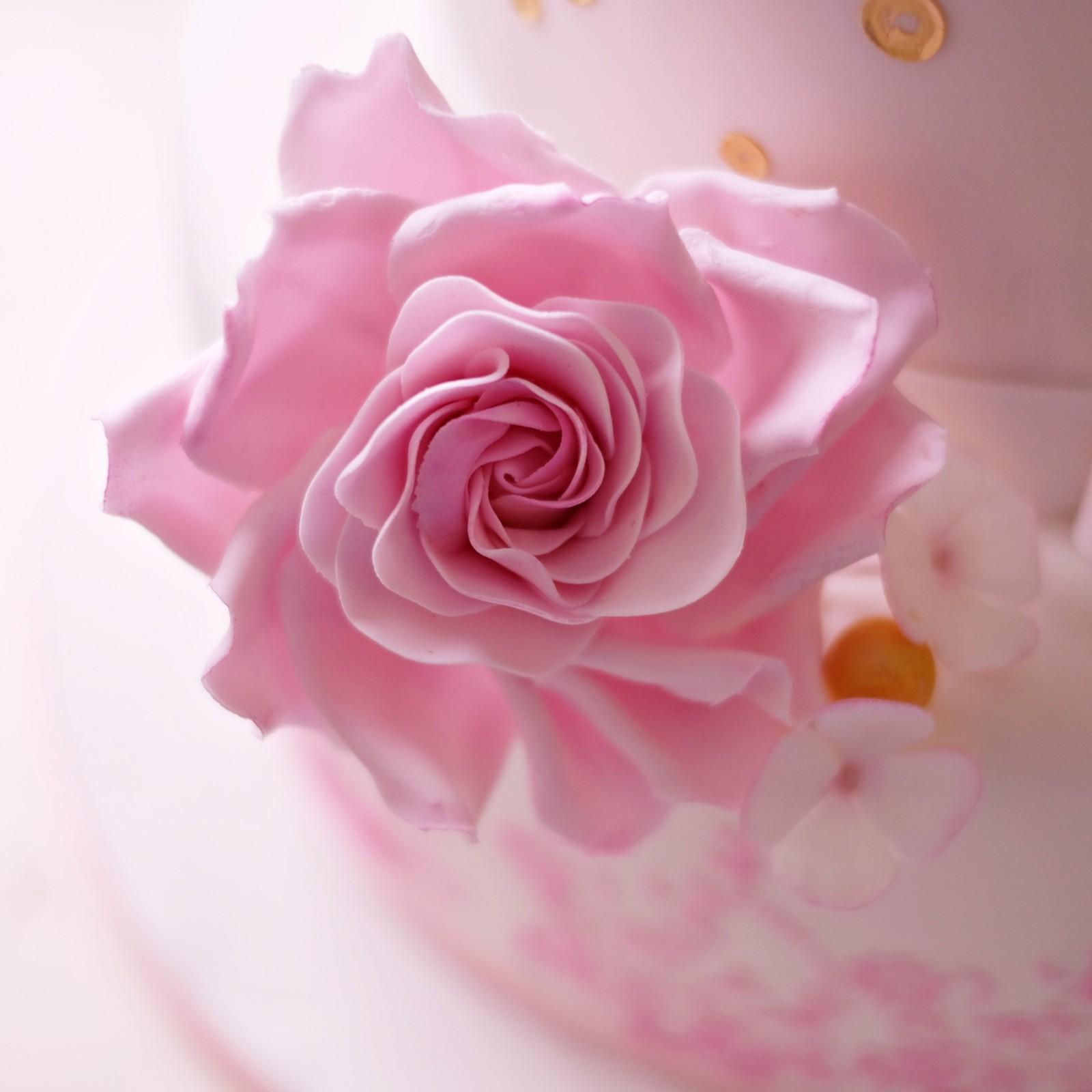 zuckerblüte