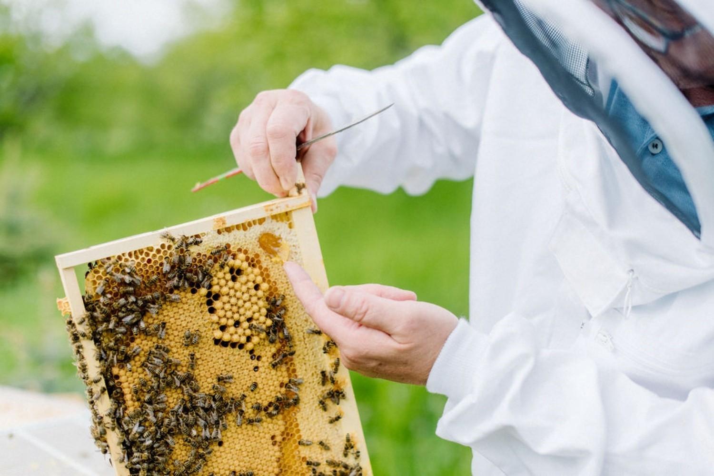 Honig Süßen