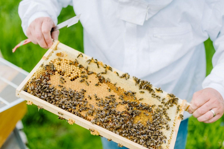 Es ist unser 2. Jahr als Imker und wir sind noch immer ohne Honig.